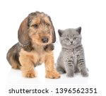 Stock photo dachshund puppy and tiny kitten sitting together isolated on white background 1396562351