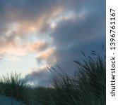 marram grass against colorful... | Shutterstock . vector #1396761167