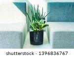 green leaf indoor plant in the...   Shutterstock . vector #1396836767