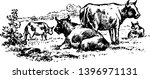 Cattle are the most common type of large domesticated ungulates vintage line drawing or engraving illustration.