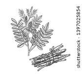 realistic medicinal plant... | Shutterstock .eps vector #1397025854