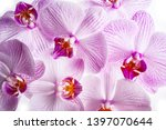 the background from pink orchid | Shutterstock . vector #1397070644