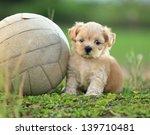 cute puppy playing ball | Shutterstock . vector #139710481