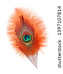 Small photo of Peacock feathers on white background. Carnival. Colored feather.