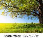 spring tree with fresh green... | Shutterstock . vector #139713349