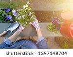 gardeners hands planting... | Shutterstock . vector #1397148704