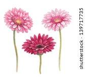 Watercolor Gerber Flowers
