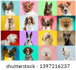 Stock photo little dogs are posing and looking in the camera cute doggies or pets are happy the different 1397216237