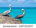pelicans sitting on the sea... | Shutterstock . vector #1397222297