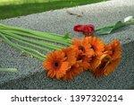 Gerbera Flowers On The Granite...