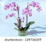 Beautiful Pink Magenta Orchid...