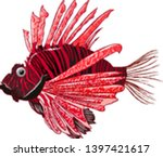 Sea Lion Fish Black Red
