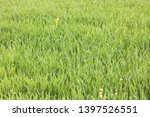 natural green background with... | Shutterstock . vector #1397526551