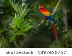 Red Parrot Scarlet Macaw  Ara...