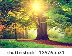 beautiful park tree | Shutterstock . vector #139765531