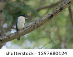 the collared kingfisher ... | Shutterstock . vector #1397680124