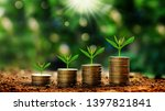 Growing Plants On Coins Stacke...