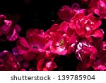 Garden Of Red Wild Roses. Rosa...