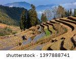 honghe yuanyang  samaba rice... | Shutterstock . vector #1397888741
