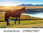 a herd of horses on the autumn... | Shutterstock . vector #1398027857