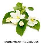 apple blossom on a white... | Shutterstock . vector #139809955