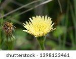 smooth golden fleece... | Shutterstock . vector #1398123461