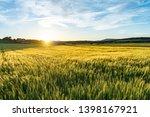 Amazing Grass Field Landscape...