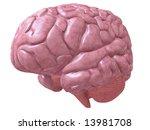 human brain | Shutterstock . vector #13981708