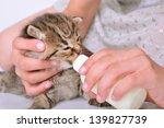 child feeding small kitten with ... | Shutterstock . vector #139827739