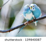 Two Blue Parakeets Perched In ...
