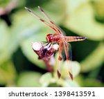 Dragonfly On Branch   Twelve...