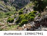 huge sheep and goat herd... | Shutterstock . vector #1398417941