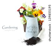 Beautiful Pansies and old watering can on a white background. - stock photo