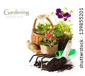 Potted Daisy flowers, pansies, and strawberry with garden tools on a white background. - stock photo