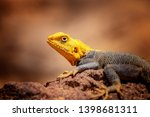 close up photo of yellow and... | Shutterstock . vector #1398681311