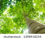 trees can help offset the... | Shutterstock . vector #1398918254