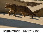 Stock photo portrait of alone cat went out to hunt and runs up the stairs a homeless and hungry cat 1398919154