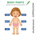 identify and match the body... | Shutterstock .eps vector #1399014194