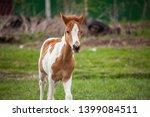 child horse little horse the... | Shutterstock . vector #1399084511
