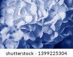 white viburnum flowers in the... | Shutterstock . vector #1399225304