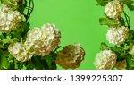 white viburnum flowers in the... | Shutterstock . vector #1399225307