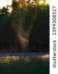 flies and mosquitos above field ...   Shutterstock . vector #1399308527
