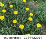 dandelion.art beautiful spring... | Shutterstock . vector #1399422014