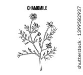 chamomile or camomile ... | Shutterstock .eps vector #1399582937