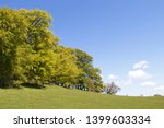 deciduous trees in spring with... | Shutterstock . vector #1399603334