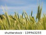 wheat field against blue sky in ...   Shutterstock . vector #139963255