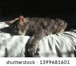 mister the cat is taking a nap... | Shutterstock . vector #1399681601
