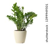 pot with zamioculcas home plant ... | Shutterstock . vector #1399949501