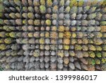 deciduous cypress forest in... | Shutterstock . vector #1399986017