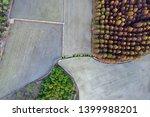 deciduous cypress forest in... | Shutterstock . vector #1399988201